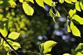 Natural background framed by backlited green leaves — Photo