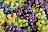 Red and green vine grapes for background — Stock Photo