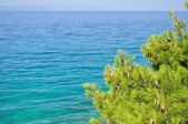 Natural background with sea and tree — Stock Photo