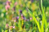 Grass in spring time — Stock Photo