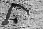 Zardzewiały gwóźdź w stary kawałek drewna — Zdjęcie stockowe