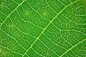 Detail view of green leaf texture — Stock Photo