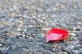 Red rose petal on asphalt — 图库照片