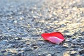 Red rose petal on asphalt — Stock Photo