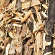 Stock Photo: Organic background of woodchips
