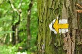 Yellow and white hiking trail signs symbols on tree — Stock Photo