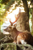 Candit shot of a doe — Stock Photo