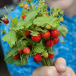 Wild strawberries — Stock Photo