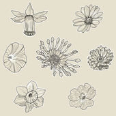 Set of seven graphic flowers — Stock Vector