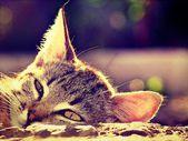 Kitten. — Stock Photo
