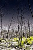 Burnt forest. Forest. Fires. Nature. Environment. — Stock Photo