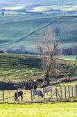 Rural landscape in south of italy — Fotografia Stock