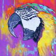Original pastel paintings on cardboard. Parrot. — Stock Photo