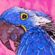 Stock Photo: Original pastel paintings on cardboard. Parrot in blue.