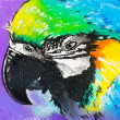 Stock Photo: Original pastel paintings on cardboard. Parrot.