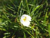 Bílý květ s kapkami deště — Stock fotografie