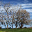 Bare Trees — Stock Photo