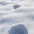 Animal tracks in snow — Stock Photo