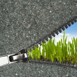 Zipper overlooks the spring field — Stock Photo