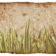 Grunge grass background — Stockfoto