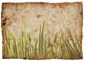 Grunge grass background — Stock Photo