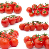 Collection of fresh tomato isolated on white background — Stock Photo