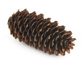 Fir-cone on the white isolated background — Stock Photo
