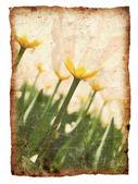 Vintage tulips — Stockfoto