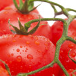 Close-up photo of tomatoes with water drops — Stock Photo