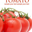 Close-up photo of tomatoes with water drops — Stock Photo #34931167