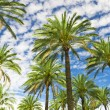 Blue sky palm trees in tropical summer — Stock Photo