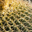 Close up of globe shaped cactus with long thorns — Foto Stock