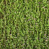 Fundo da parede de folhas verdes — Fotografia Stock