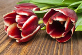 Bouquet of tulips on old wooden boards — Stock Photo