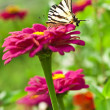 Butterfly landing on flower — Stock Photo