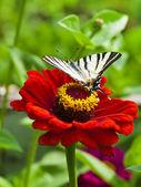 Butterfly landing on flower — Stock Photo