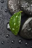 Zen stones and leaves with water — Stock Photo