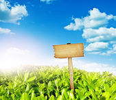 Wooden sign with meadow and blue sky — Stock Photo