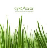 Beautiful grass — Stock Photo