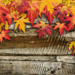 Autumn frame — Stock Photo #37982533
