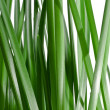 Fresh green grass background — Stock Photo #37982731