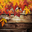 Stock Photo: Autumn frame