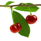 Cherries with leaf isolated on a white background — 图库照片