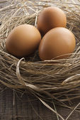 Macro shoot of brown eggs at hay nest in chicken farm — Stock Photo