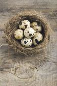 Quail eggs in nest — Stock Photo