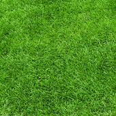 Green grass surface — Stockfoto