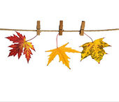 Leaves hanged on clothesline — Stok fotoğraf