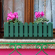 Pink flowers on the windowsill — Stock Photo