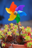 Multicoloured windmill toy in a flower pot — Stock Photo