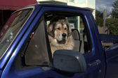 Dog in control of a pick up truck in Skagway, Alaska — Stock Photo